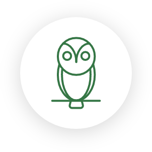 Meeting Owl & Tower